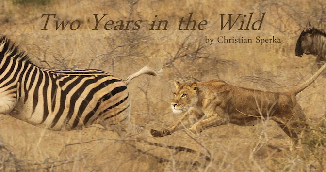 Two Years in the Wild_1038x356