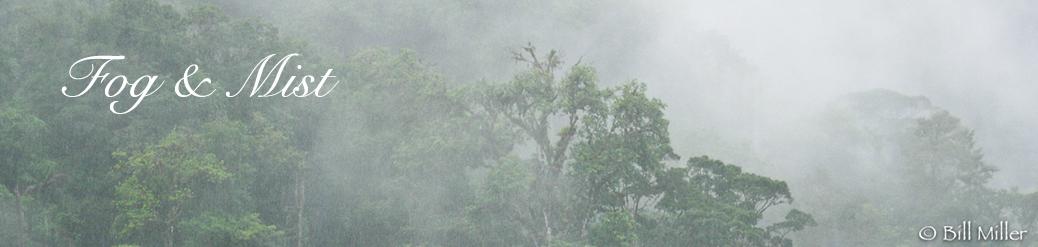 Costa Rican Rain Forest