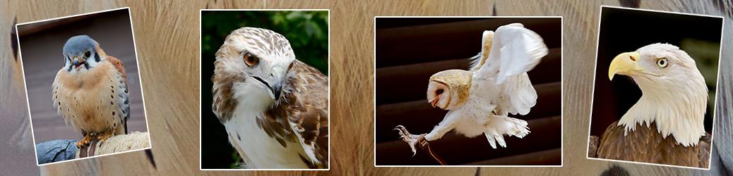 Dianne Blankenbaker Raptor Photographs