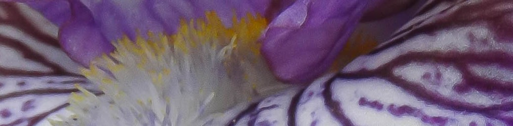 slice - iris